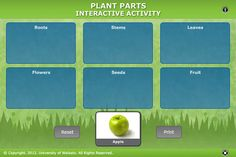 Student Activity - Plant parts - In this activity, students relate commonly eaten foods to different parts of the flowering plant life cycle. They use an interactive or paper-based graphic organiser. Interactive Learning, Interactive Activities, Science Activities, Smart Board Activities, Learning Sites, Parts Of A Plant, Photosynthesis, Leaf Flowers, Planting Flowers