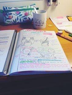 ||| student, study, school, college, university, notes, notebook, inspo, inspiration, motivation