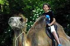 © Kamelreiten in Schlüsselberg bei Grieskirchen Horses, Animals, Camel, Road Trip Destinations, Equestrian, Adventure, Animales, Animaux, Horse