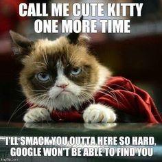 Grumpy Cat Quotes, Grumpy Cat Meme, Funny Cat Memes, Funny Dogs, Grumpy Kitty, Cute Animal Memes, Animal Quotes, Funny Animals, Cute Animals