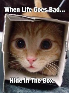 Click the Photo For More FUNNY and Cute Cat Videos and Photos - animals - Katzen Funny Animal Jokes, Funny Cat Memes, Cute Funny Animals, Animal Memes, Funny Cats, Funny Quotes, Panda Funny, Animal Fails, Funniest Animals