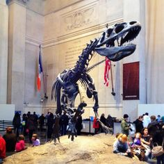 museum of natural history in nyc