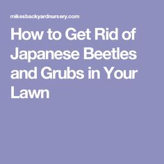 Wish To Know How To Get Rid Of Japanese Beetles Then Read This How To Get Japanese Beetles