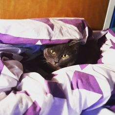 Big mood . . . #niccythecat #cats #catsofinstagram #instacat