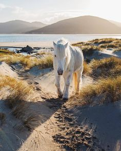 A horse on a beautiful beach in Scotland IN WINTER? Neigh bother 😉🐴 Here is pic on Luskentyre beach experiencing a… Best Vacation Destinations, Great Vacations, Beach Rides, Horse Breeds, Horse Riding, Riding Gear, Wild Horses, Beautiful Horses, Beautiful Beaches