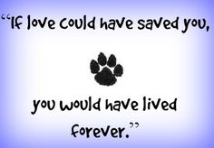 7 Beautiful Pet Memorials and Gifts - Say Good-Bye With Love > These different types of pet memorials include engraved stones, urns, and online tributes to lost pets – all to help you remember your lost dog or cat. #dogs #dogblog