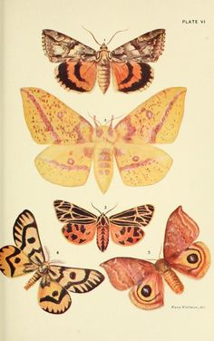 Colour plates of insects (Butterflies; Moths; Moths; Skipper Butterflies; Butterflies; Butterflies; Beetles; Saw-flies, Gall-flies, Ichneumons, Wasps, Bees, Ants; Protective Resemblance. Taken from...