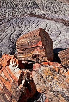 Petrified wood pile in weathered Blue Mesa area of Petrified Forest National Park. Fossilized Wood, Petrified Wood, Minerals And Gemstones, Rocks And Minerals, Petrified Forest National Park, Dinosaur Fossils, Historical Artifacts, Cool Rocks, Rocks And Gems