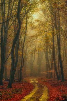 Golden Leaf Forest, Netherlands