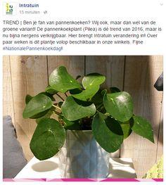 Binnenkort te koop bij Intratuin! :) (18/3/2016)