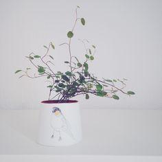 délicate plante