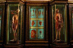 Bologna - Museo di Anatomia Umana (Palazzo Poggi)