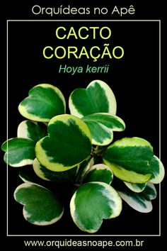 Cactus Names, Cactus Y Suculentas, Begonia, Indoor Plants, House Plants, Plant Leaves, Succulents, Nature, Flowers