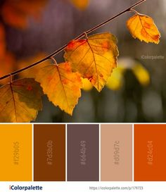 Fabulous Fall Color Palette Collection Ideas For Amazing Home Interior 20 Fall Color Schemes, Fall Color Palette, Colour Pallette, Color Combos, Fall Paint Colors, Orange Color Schemes, Autumn Colours, Rustic Color Palettes, Rustic Colors