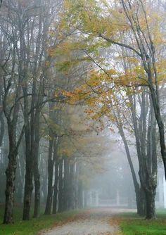 Natures' fall decor