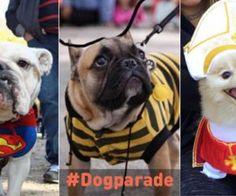Das sind die coolsten Halloween-Kostüme für Hunde!