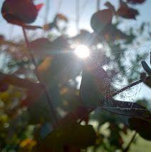 Crisp Autumn morning at Kings Barn Trees nursery