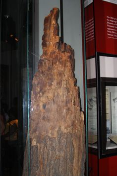 All that was left of a large tree after a Civil War battle.  (See accompanying info placard.)   07/2011.