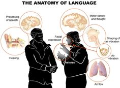 97 best comunicao linguagemgestos images on pinterest want to know how understanding a language works check out illustration of the anatomy of language from the national science foundation fandeluxe Images