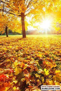 Őszi táj - őszi erdőben - fotó |  Őszi táj