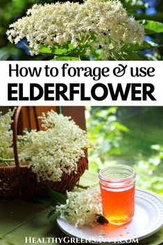 Elderflower is an utterly delicious ingredient you can forage fresh or use dried. It also has some excellent medicinal properties. Here's what to know about foraging, using, and preserving elderflowers for cocktails, teas, tinctures, desserts, and more. #elderflower #medicinalplants #naturalremedies #elderberry #foraging Elderberry Flower, Elderberry Plant, Jam Recipes, Real Food Recipes, Healthy Recipes, What Is Elderflower, Gooseberry Jam, Rosemary Gladstar, Green Living Tips