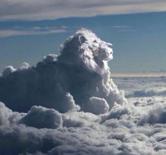 """The Lion of Judah """"Aslan a man! Beaver said sternly. I tell you he is the King of the wood and the son of the great Emperor-Beyond-the-Sea. Don't you know who is the King of Beasts? Aslan is a lion—the Lion, the great Lion. Angel Clouds, Sky And Clouds, Cool Pictures, Cool Photos, Beautiful Pictures, Cloud Shapes, Lion Of Judah, Chronicles Of Narnia, Beautiful Sky"""