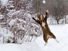 30 Cats in Snow. Via BuzzFeed. Was torn between putting this pin here or on 'Nature' board. More cat-focused, though.