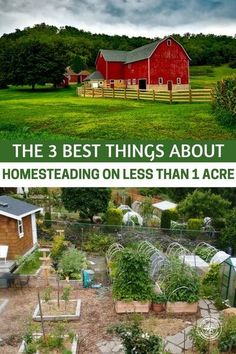 The 3 Best Things about Homesteading on LESS than 1 ACRE - I bring you this article which comes from a great homesteading website. The article is going to offer you up the possibilities and the benefits of homesteading on less than one acre. That may sound preposterous to some of you and if that's the case, good! Read this article and you may find yourself homesteading in a years time. Anything is possible, you just have to find the people who are already doing it! #homestead #homesteading