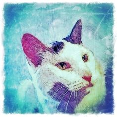 Custom Digital Pet Portrait by BZTAT. More at www.bztatstudios.com.