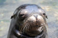 Arsene Wenger recently admitted that he had that sea lion's agent in his home but the zoo made an offer that he couldn't make. Description from redditian.com. I searched for this on bing.com/images
