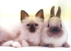 """Résultat de recherche d'images pour """"photo de chat avec un autre animal"""""""