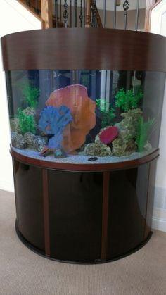 Oceanic 144 Gallon Half Circle Fish Tank