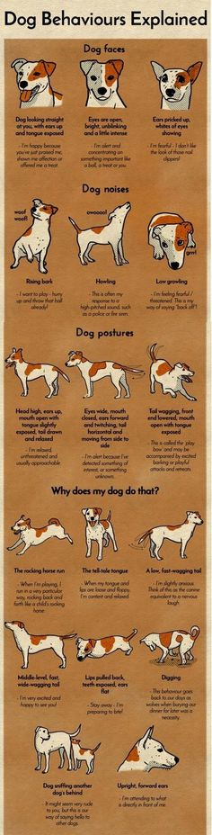 An Kety Pet Care. Get Your Dog Trained Today With These Simple Tips. Training your dog is important for an obedient relationship between you and your canine friend. During the training process, you and your dog will experien Dog Noises, Dog Body Language, Secret Language, Dog Facts, Dog Care Tips, Pet Care, Dog Training Tips, Potty Training, Safety Training