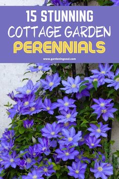 Let's take a look at 15 cottage garden perennials, these plants will look perfect together, giving your garden space that cottage garden look-and-feel. Garden Yard Ideas, Lawn And Garden, Garden Landscaping, Garden Tips, Outdoor Plants, Garden Plants, Outdoor Gardens, Growing Flowers, Planting Flowers