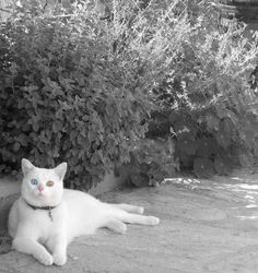#cat #black #white #cute #photography #morfeo
