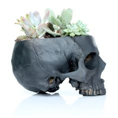 Contrasting death with new life, this realistic skull planter makes a one-of-a-kind statement. A great skull lover's gift!  <br> <ul><li> Handcrafted, with no two skulls exactly alike   </li> <li> Made from polyresin with an antique finish  </li> <li> Fits about 5 or 6 succulents </li> <li> Available in black or white  </li></ul>