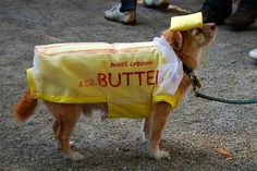 Butter | 16 Adorable Pets Who Dressed Up As Food For Halloween
