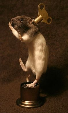 A wind-up mouse | 40 Taxidermied Animals That Are Scarier Than Living Animals