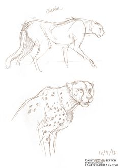 Daily Animal Sketch – Cheetahs – Last of the Polar Bears Cheetah Drawing, Cat Drawing, Drawing Sketches, Cool Drawings, Sketching, Animal Sketches, Animal Drawings, Bear Sketch, Different Forms Of Art