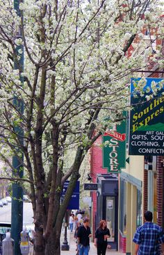 spring blooms in downtown Asheville NC