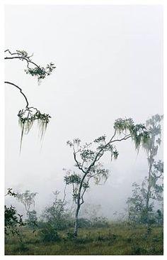 Cayo, Belize par Axel Hütte