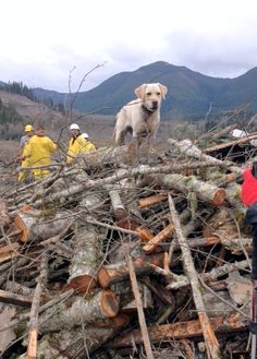 My search dog Keb deployed on the OSO landslide