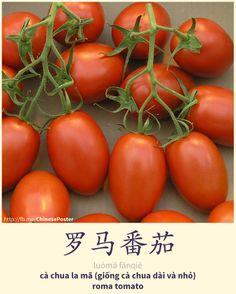 罗马番茄 - Luó mǎ fān qié - Cà chua dài, cà chua lamã - Roma Tomato
