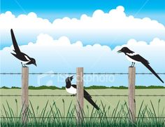 Magpies on the fence Royalty Free Stock Vector Art Illustration