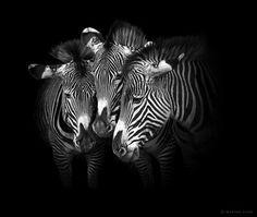 By Marina Cano wild life.