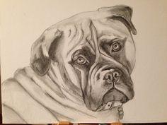 Bella the Bullmastiff in pencil