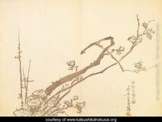 Branch of Plum - Katsushika Hokusai - www.katsushikahokusai.org