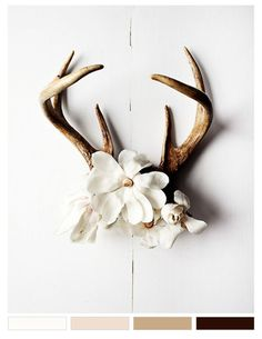 Antler decor- could put succulents around also