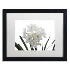 Paper White Bouquet by Kurt Shaffer Framed Photographic Print