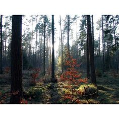 North american forest Pictures, Photos Normal 1024x768 ❤ liked on Polyvore